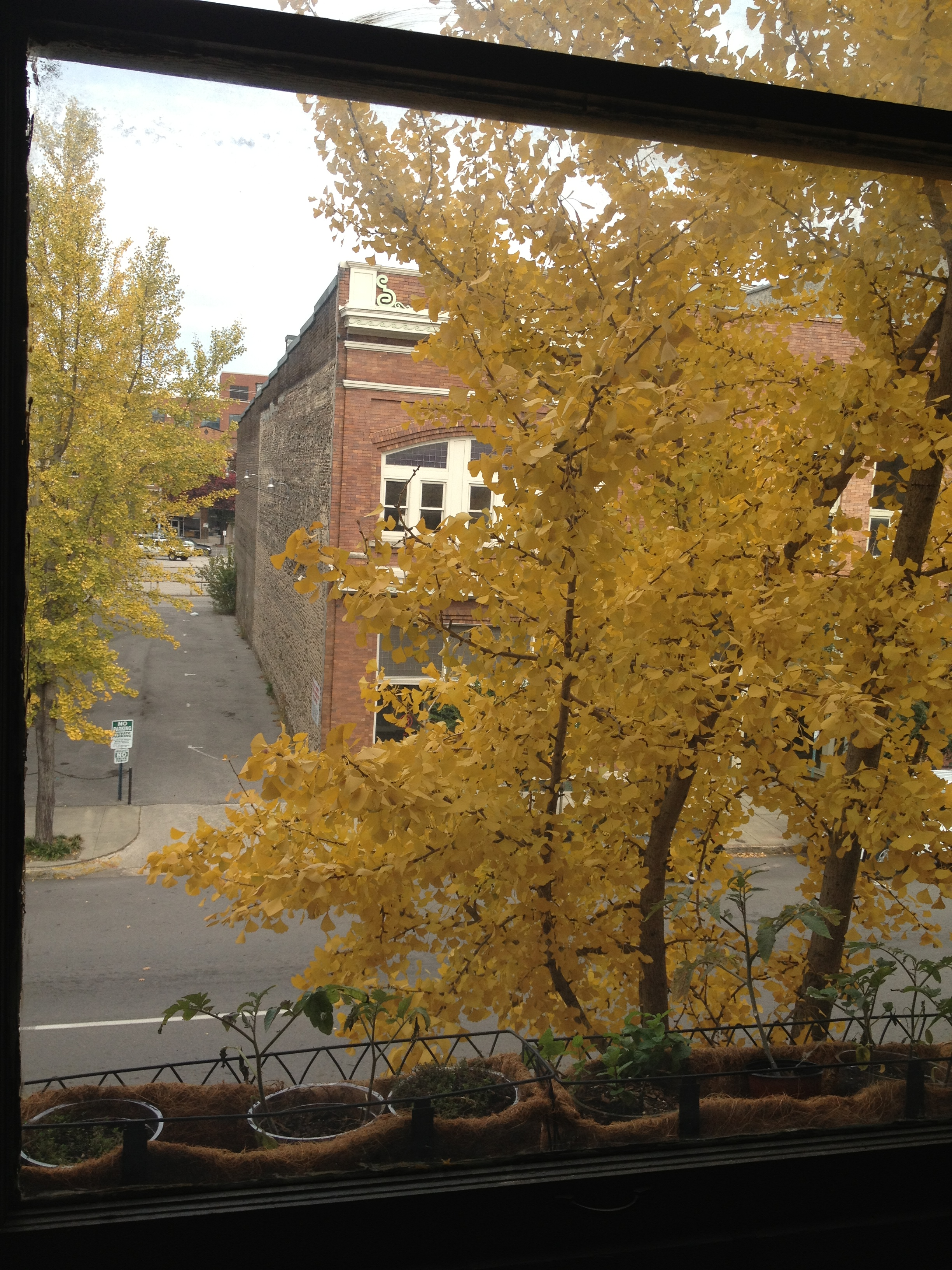 Fall at the Counts Brothers Building
